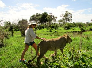 Walking in the jungle in Africa with a young lion