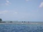 Buscando langostas en el arrecife de Bora Bora
